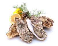 Oester stock afbeelding