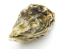 Oester Stock Foto's