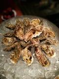 oester Royalty-vrije Stock Fotografie