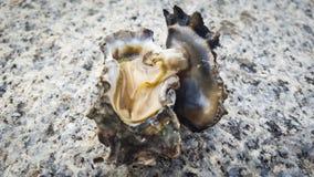 oester Royalty-vrije Stock Foto's
