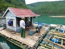 Oester die in Vietnam bewerken stock afbeelding