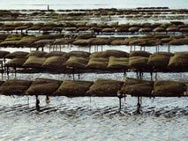 Oesterbedden bij Meer in Frankrijk Royalty-vrije Stock Fotografie
