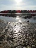 Oesterbedden die bij Meer in Frankrijk bewerken Stock Foto