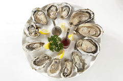 Oesters Royalty-vrije Stock Afbeelding