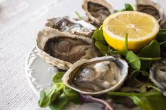 oesters Royalty-vrije Stock Foto's