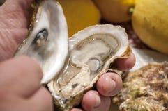 oesters Royalty-vrije Stock Afbeeldingen