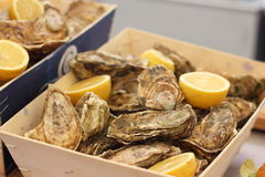 oesters Stock Afbeelding