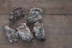 oesters stock afbeeldingen