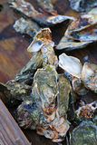 oesters Royalty-vrije Stock Foto's