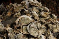 oesters stock fotografie