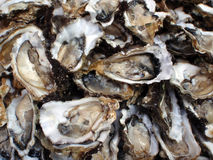 Oesters, halve shells, close-up Stock Foto's