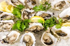 Oesters op Halve Shell Royalty-vrije Stock Foto's
