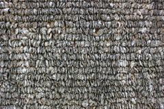 Oestershell muren Royalty-vrije Stock Afbeeldingen