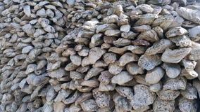 Oestershell muur Muur, achtergronden en texturen door oude oestershell miljoenen oude die jaren wordt gecreeerd Stock Afbeeldingen