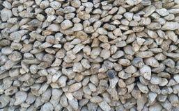 Oestershell muur Muur, achtergronden en texturen door oude oestershell miljoenen oude die jaren wordt gecreeerd Royalty-vrije Stock Afbeeldingen