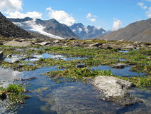 Oetztal: Wet mountain meadow Stock Photos