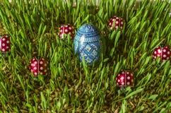 Oeuf bleu peint en bois de Pâques parmi des coccinelles sur l'orge poussée Images stock