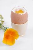 Oeuf bouilli et fleur jaune Photographie stock libre de droits