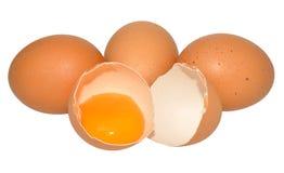 Oeuf cassé de poulet Images stock