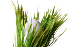 Oeuf dans l'herbe Photos stock