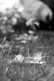 Oeuf dans l'herbe Images libres de droits