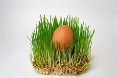 Oeuf dans la fin naturelle d'alimentation saine de régime de forme physique de germe de blé d'herbe verte  images stock