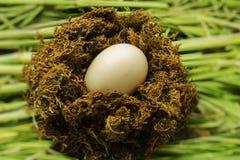 oeuf dans le nid Photo stock