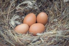 Oeuf dans un nid attendant à la trappe Image libre de droits