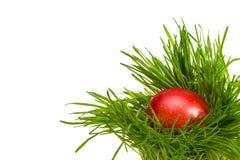 Oeuf de Brown pâques dans l'herbe verte Photographie stock libre de droits