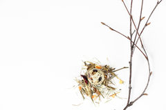 Oeuf de caille dans le nid Images libres de droits