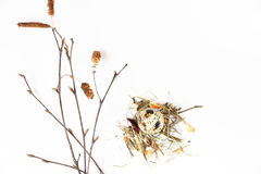 Oeuf de caille dans le nid Photos stock