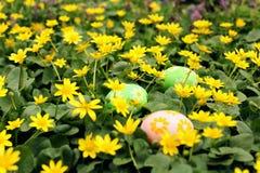 Oeuf de pâques caché dans un pré de fleur Chasse de tradition et recherche des oeufs photos stock