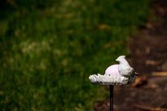 Oeuf de pâques caché pour la chasse à oeufs sur le bain d'oiseau photo libre de droits