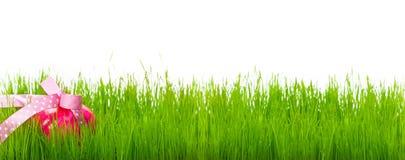 Oeuf de pâques dans l'herbe Photos stock