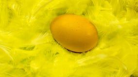 Oeuf de pâques dans le nid Image libre de droits