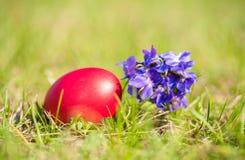Oeuf de pâques et fleur violette dans l'herbe verte Image stock
