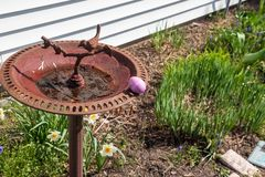 Oeuf de pâques rose caché sur un bain d'oiseau dans le jardin d'agrément à la maison photo libre de droits
