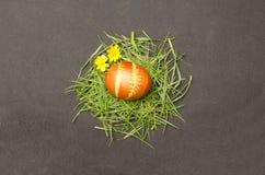 Oeuf de pâques sur l'herbe Photos libres de droits