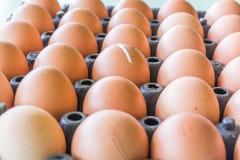 Oeuf de poulet Photos libres de droits