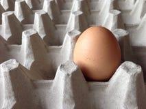Oeuf de poulet Image stock