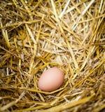Oeuf de poulet dans le nid Photos stock