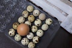 Oeuf de poulet parmi des oeufs de caille Ils se situent dans un récipient en plastique À côté de la boîte en bois images stock