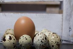 Oeuf de poulet parmi des oeufs de caille Ils se situent dans un récipient en plastique À côté de la boîte en bois photographie stock libre de droits