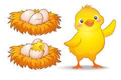 Oeuf et petit poulet Photo stock