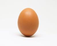 Oeuf frais de poulet sur le fond blanc Oeuf brun d'isolement images libres de droits