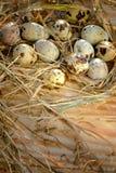 Oeuf, oeuf de poulet Image libre de droits
