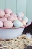 Oeufs augmentés par ferme Photos libres de droits
