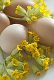 Oeufs avec un groupe de fleurs. Photo stock