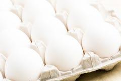 Oeufs blancs Image stock
