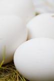Oeufs blancs dans la paille Photographie stock